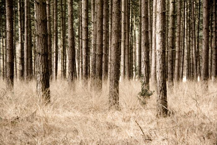 hooi-bomen